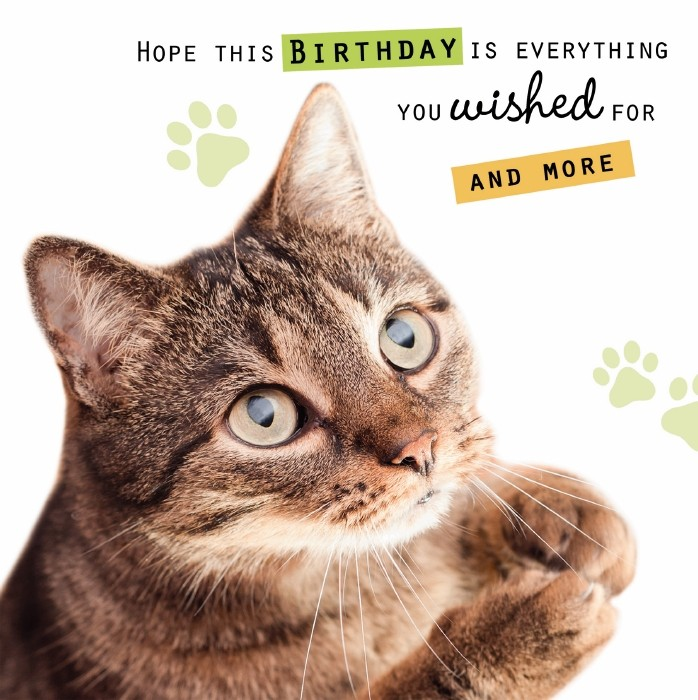 Birthday Cat Wishes OCD UK