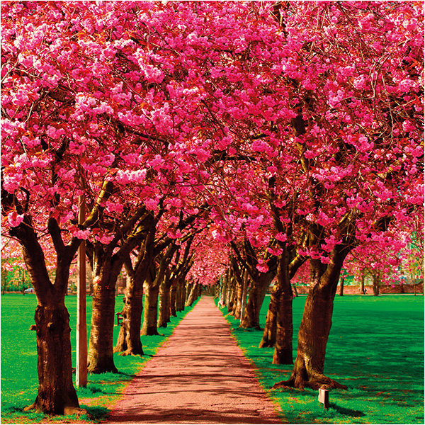 Pink Avenue